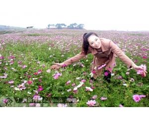 南宁台湾花卉产业园欣赏格